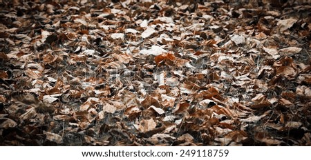 Faded leaves on the grass. Aged photo. - stock photo