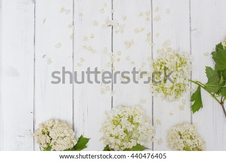 Fading viburnum buldenezh flowers with dry petals on a white wooden background. Background or frame for wedding