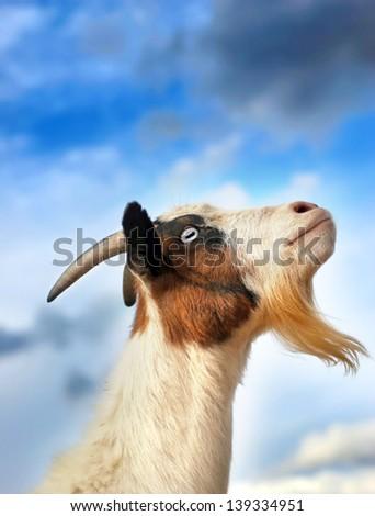 Fainting Goat over Blue Sky - stock photo