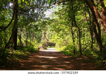 Fairy forest, tunnel and the light path - stock photo