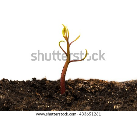 fairy sprout at the ground with white background