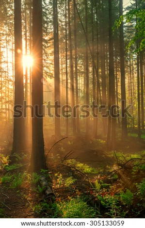 fairy tale fir tree forest - stock photo