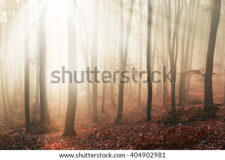 Fairy tale light into foggy forest - stock photo