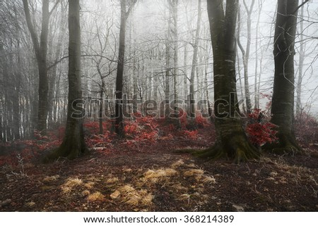 Fairy tale looking forest into the morning frost - stock photo