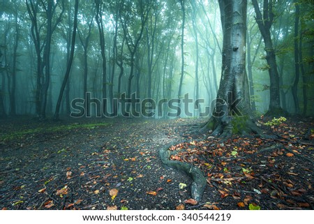 Fairy tale tree roots on a train in misty autumnal forest - stock photo