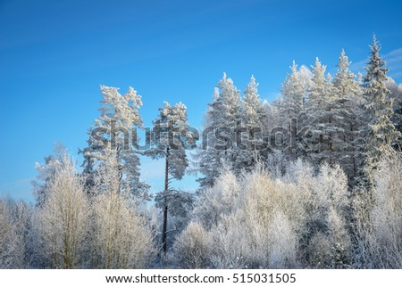 fairy-tale winter forest all in white frost