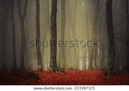Fairytale forest - stock photo