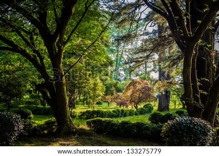 Fairytale Forest, Batumi Botanical Garden, Georgia - stock photo