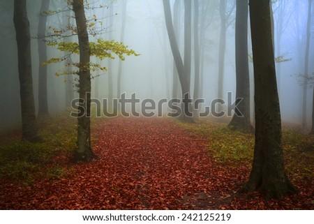 Fairytale forest in foggy autumn day - stock photo