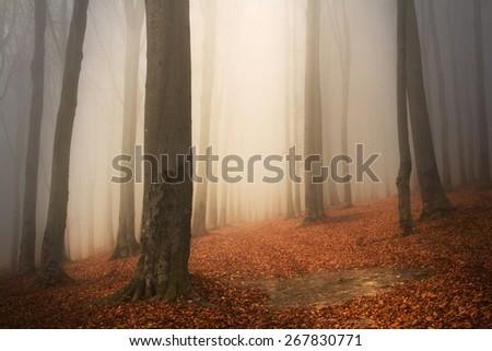 Fairytale forest into the fog - stock photo