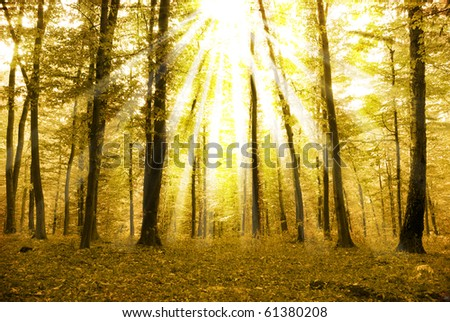 Fairytale forest sunlight and shadows - stock photo