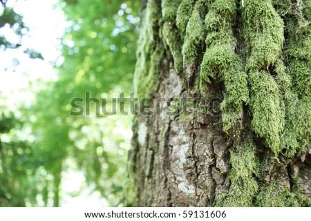 fairytale tree - stock photo