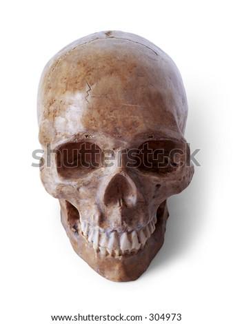 Fake halloween skull. Path included - stock photo