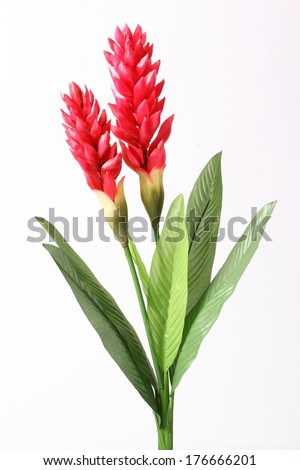 Fake Red cone ginger flower on white background - stock photo