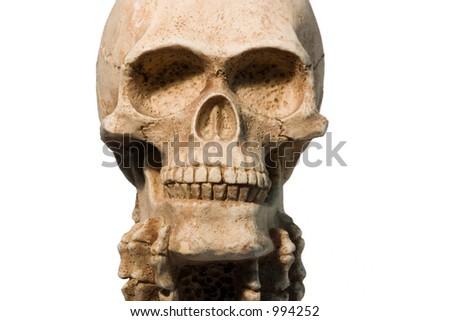 Fake skull - stock photo