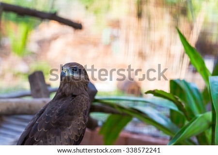 Falcon close up in the park with green background - stock photo