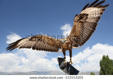 falcon has spread wings.  background sky.  - stock photo