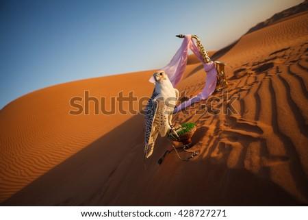 Falcon in desert, Dubai. Portrait - stock photo
