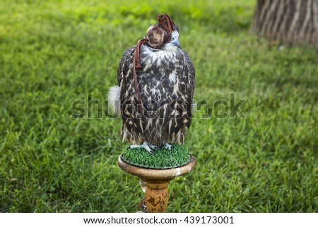 Falcon in forest is ready for hunting - stock photo