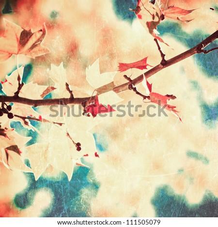 Fall - stock photo