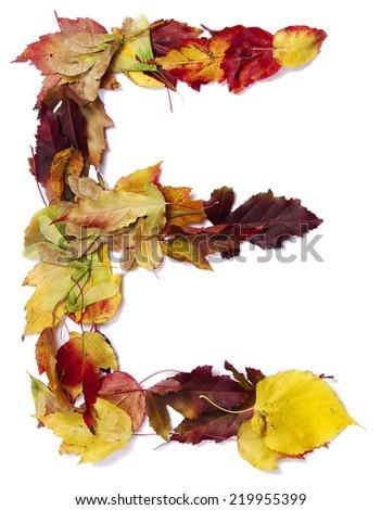 Fall alphabet letter E - stock photo