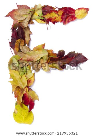 Fall alphabet letter F - stock photo