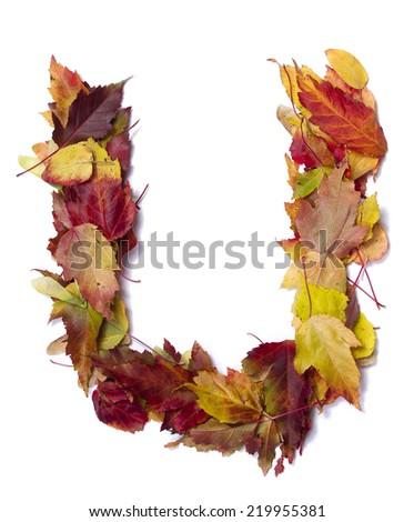 Fall alphabet letter U - stock photo