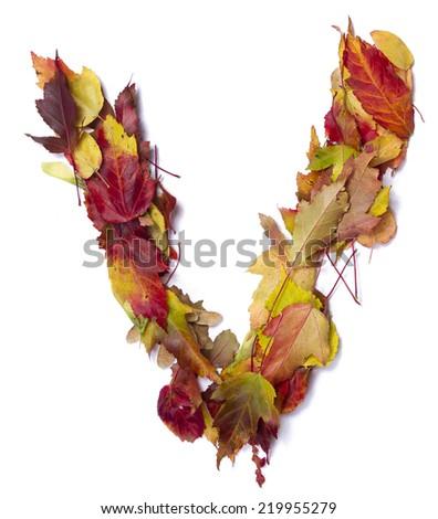 Fall alphabet letter V - stock photo