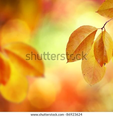 Fall.Autumn - stock photo