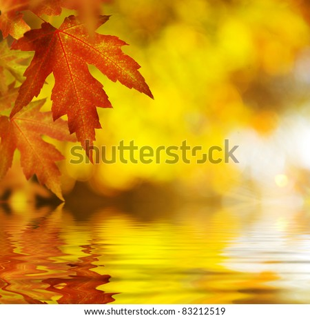 Fall.Autumn Background - stock photo