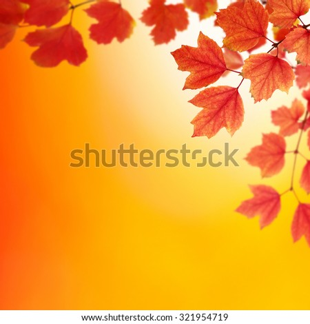 Fall, autumn, leaves background. A tree branch with autumn leaves on a blurred background - stock photo