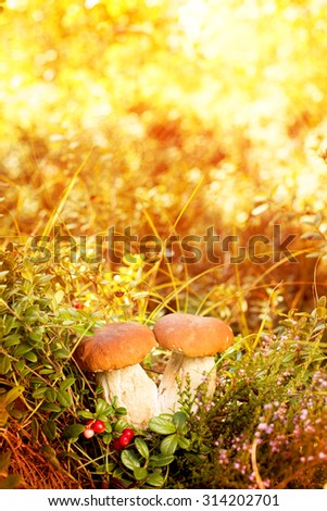Fall, autumn, leaves background. Mushrooms and berries in the forest, woods  with autumn leaves on a blurred background. Landscape in autumn season 