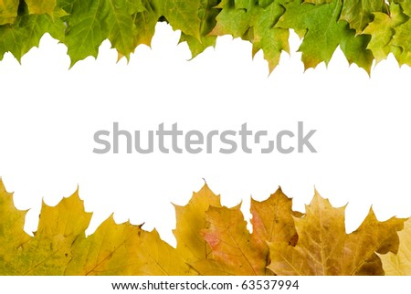 Fall autumn leaves on white background - isolated - stock photo