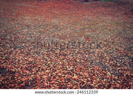 Fall autumn leaves with different colors fallen to the ground in a forest - stock photo