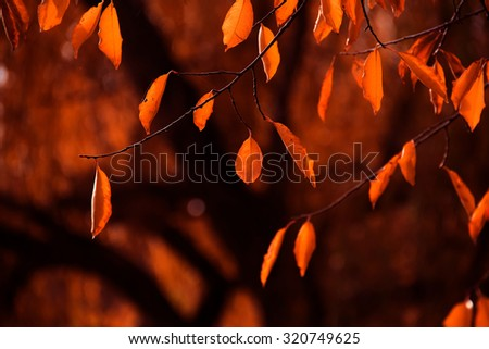 fall autumn yellow dry  leaves background blur