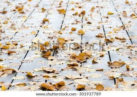 Fall background - stock photo