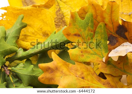 Fall background - stock photo