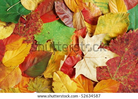 Fall background with a variety of different types, shapes and colors of leaves