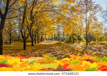 Fall background with orange foliage, seasonal autumn backdrop