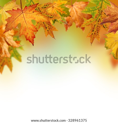 Fall background with orange, red and yellow autumn leaves  - stock photo