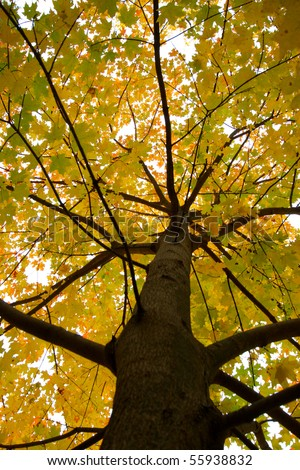fall branches of tree - stock photo
