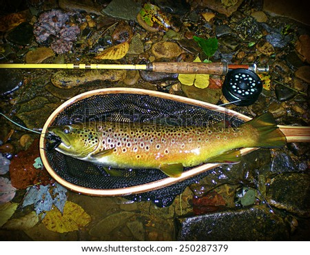 Fall Brown Trout - stock photo