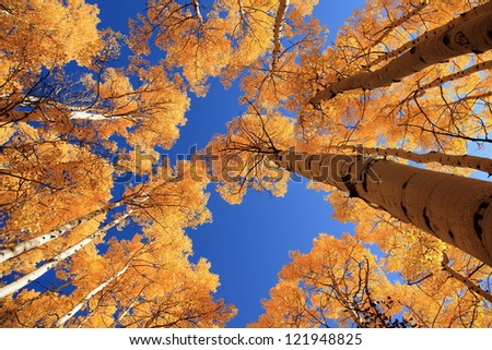 Fall Color - stock photo