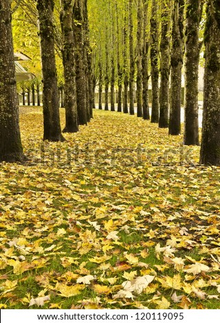 Fall color in nike campus - stock photo