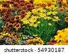 fall color, rudbeckia flowers in autumn garden - stock photo