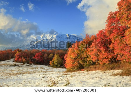 Fall color spectrum in the Wasatch Mountains, Utah, USA.
