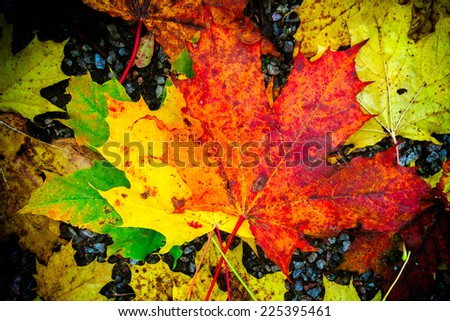 Fall colored foilage leaves on ground - stock photo
