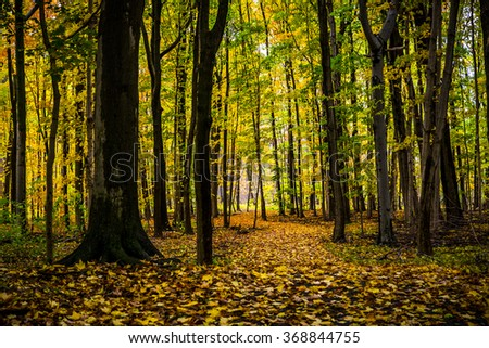 Fall Colored Forest