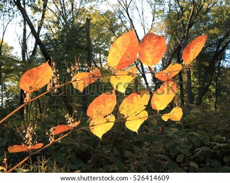Fall Colors - Autumn leaves in deep fall colors with copy space.