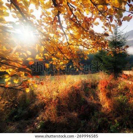 Fall colors garden - stock photo